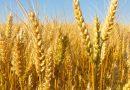 Import/export cerealicolo in Italia nei primi sette mesi del 2019