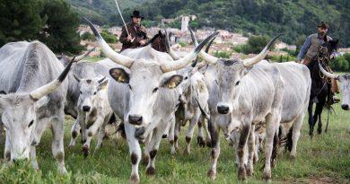 In 10 anni addio a 2 milioni di mucche, pecore e capre