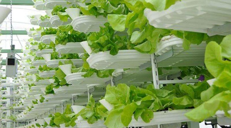 Le vertical farm mettono radici