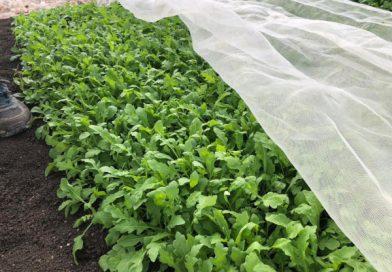 Gli schermi Arrigoni a protezione delle colture bio