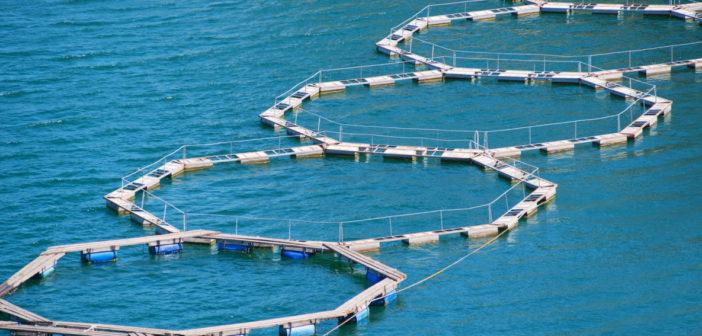 La Fao ad Aquafarm per un'acquacoltura responsabile