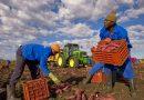 Senza lavoratori stagionali scaffali vuoti in Europa