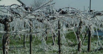 Il gelo fa strage di frutta e verdura