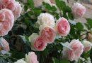 Perso 60% produzione di fiori e danni da 1 miliardo di euro