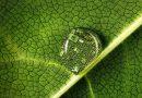 Plant Health 2020 salute delle piante/salute dell'uomo