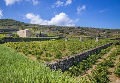 I dati del Consorzio di tutela Vini Doc Sicilia