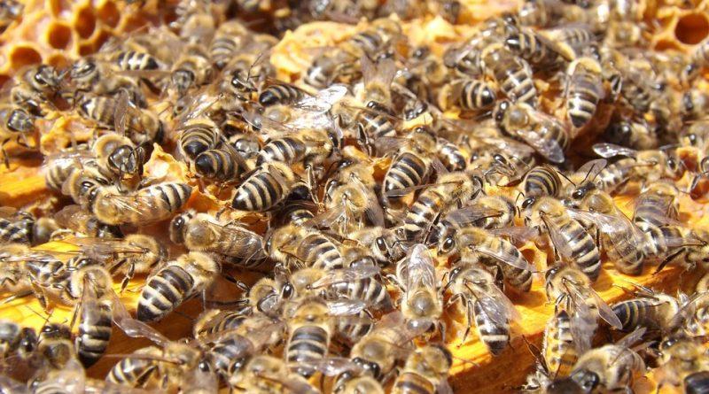 Decreto sblocca due milioni per il settore apistico