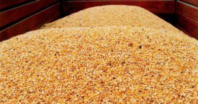 Import/export cerealicolo in Italia nei primi quattro mesi del 2020