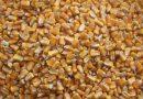 Import/export cerealicolo in Italia nei primi sei mesi del 2020