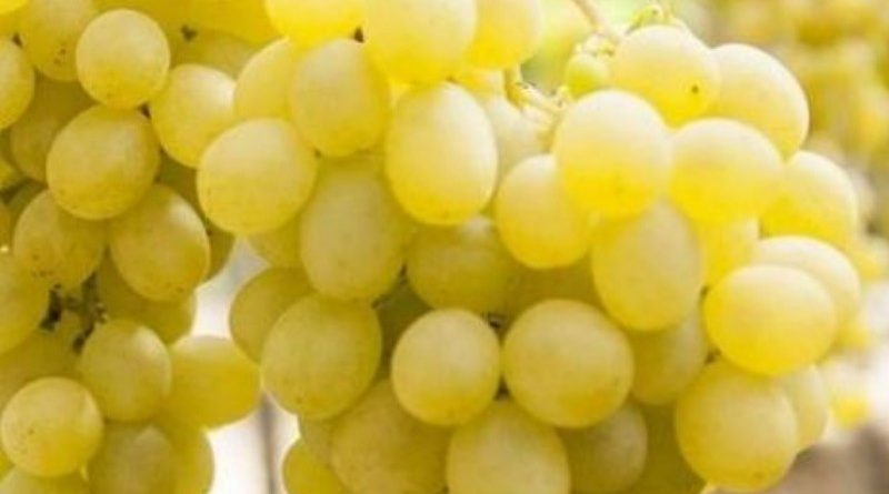 Cia invia al ministro Bellanova strategia di rilancio in tre punti per l'uva da tavola