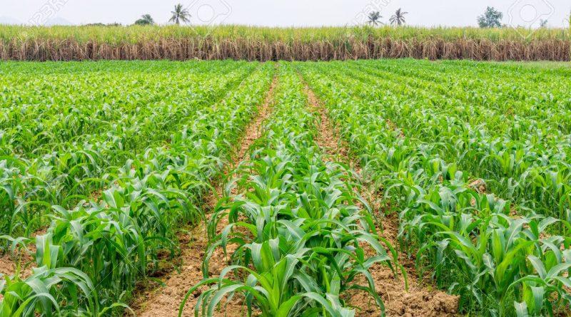 Corteva Agriscience inaugura in Germania le prime Innovation Farms