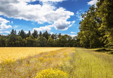 L'impegno di BASF per promuovere l'agricoltura sostenibile in Europa