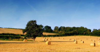 L'agroalimentare come volano della ripresa economica