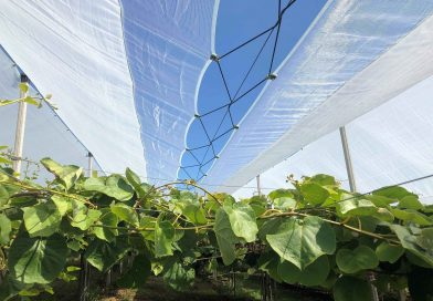 Da Arrigoni soluzioni testate ed efficaci per kiwi rosso