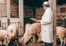 Indici Crefis di redditività allevamento, macellazione e stagionatura dei suini