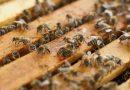 Aperto il bando per la realizzazione di progetti per il settore apistico