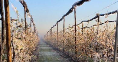 Per il gelo in ginocchio 60% agricoltura italiana