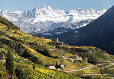Il Consorzio Vini Alto Adige fa il punto sulla vendemmia 2020