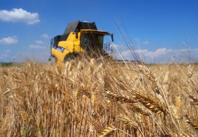 Frudur-0, la sfida del grano duro a residuo zero