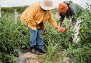 """Al via """"Rural Social ACT"""", contro il caporalato progetto Cia con 30 partner"""